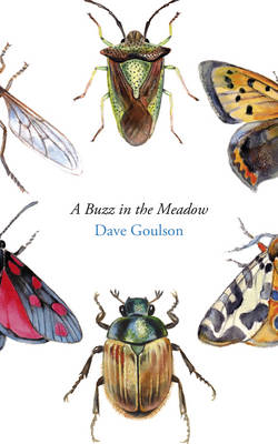 A Buzz in the Meadow (Hardback)