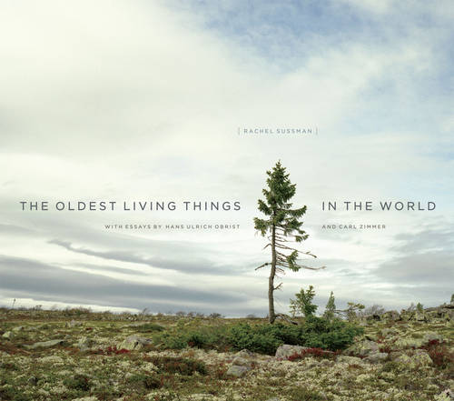 The Oldest Living Things in the World (Hardback)
