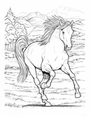 Kleurplaten Paarden En Pony S En Veulens Wonderful World Of Horses Coloring Book By John Green