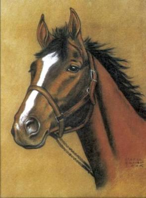 Horse Notebook (Paperback)