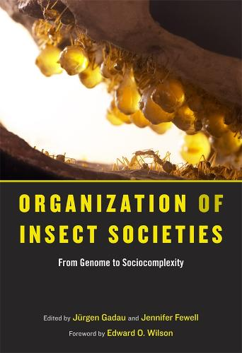 Organization of Insect Societies: From Genome to Sociocomplexity (Hardback)
