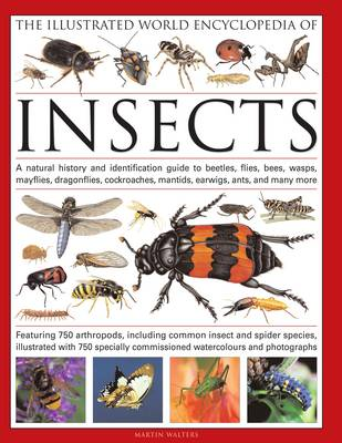 The Illustrated World Encyclopaedia of Insects: A Natural History and Identification Guide to Beetles, Flies, Bees Wasps, Springtails, Mayflies, Stoneflies, Dragonflies, Damselflies, Cockroaches, Mantids, Earwigs ... and Many More (Hardback)