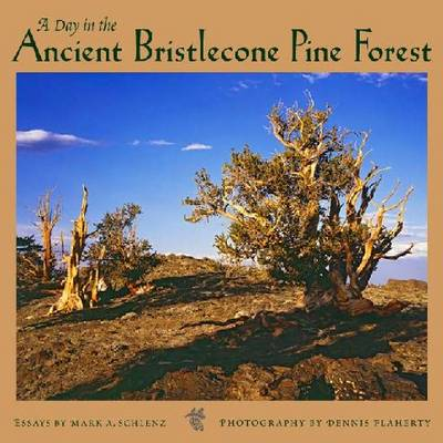 A Day in the Ancient Bristlecone Pine Forest (Hardback)