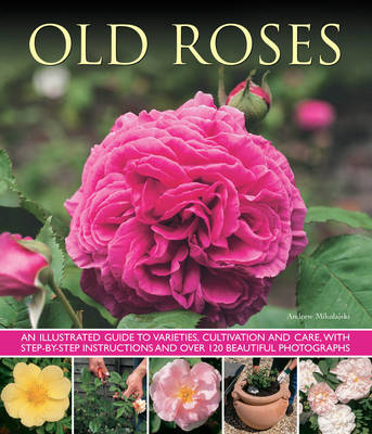 Old Roses: an Illustrated Guide to Varieties, Cultivation and Care, with Step-by-step Instructions and Over 120 Beautiful Photographs (Paperback)