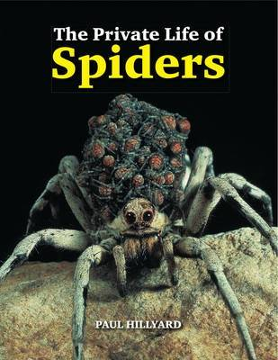 The Private Life of Spiders (Hardback)