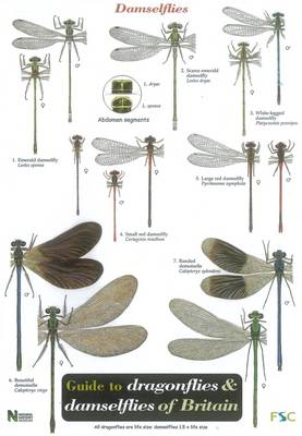 Guide to the Dragonflies and Damselflies of Britain - Occasional Publications S. No. 53 (Sheet map, folded)
