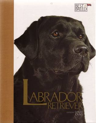 Labrador Retriever - Best of Breed (Hardback)